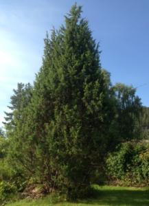 Bresken-i-hagen