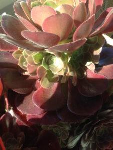 Sukkulent-m-ny-blomsterkrans