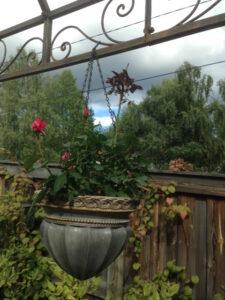 roser kan trives